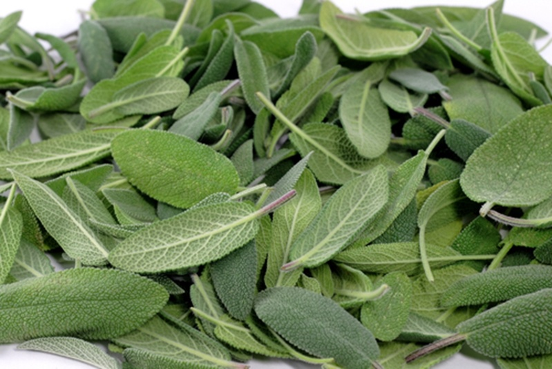 Sage Advice: How Using Sage May Improve Oral Health