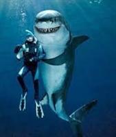 "ENTREPRENEUR'S TIPS #32: Am I ""Shark Tank"" Worthy?"