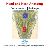 Q: The senses of the anterior third of the tongue are provided by which cranial nerve?