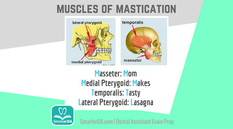Q: Which one is NOT a muscle of mastication?