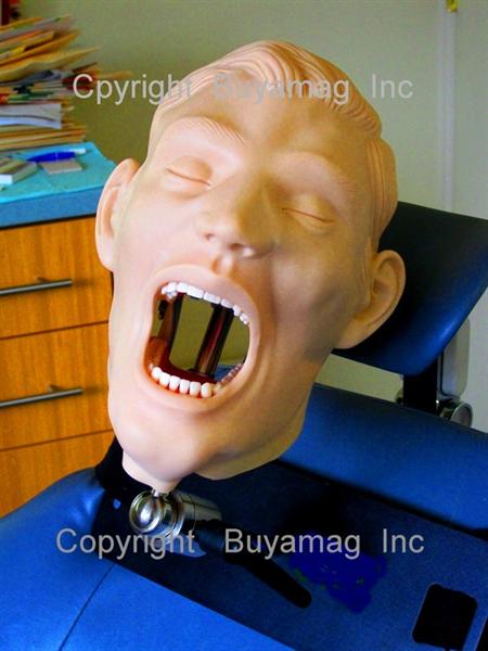 Dental Models At Buyamag inc Design Education Dental Resources For Dental Schools Teaching Programs