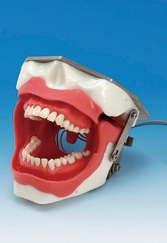 Dental Models At Buyamag inc Design Education Dental Resources For Dental Schools Teaching Programs