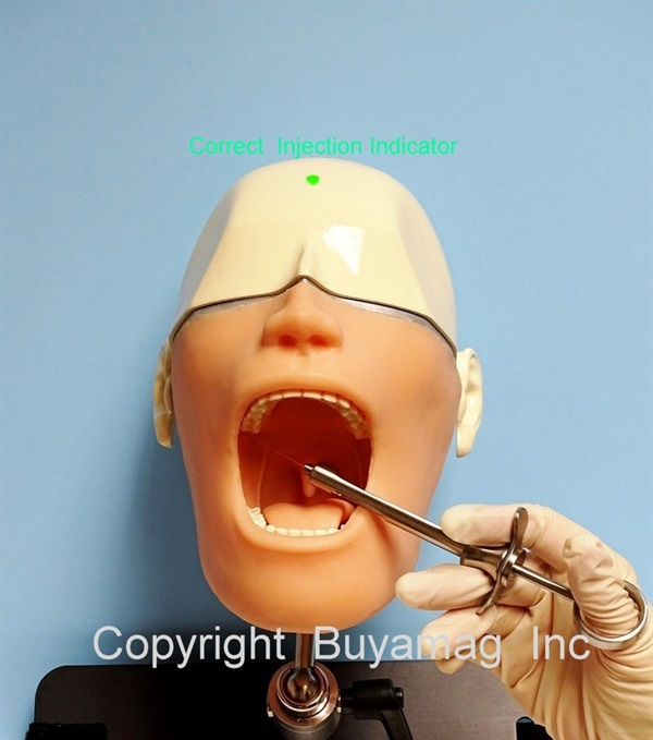 When it comes to Dental Education www.buyamag.com can offer complete selection of Dental Education Models for dental schools.