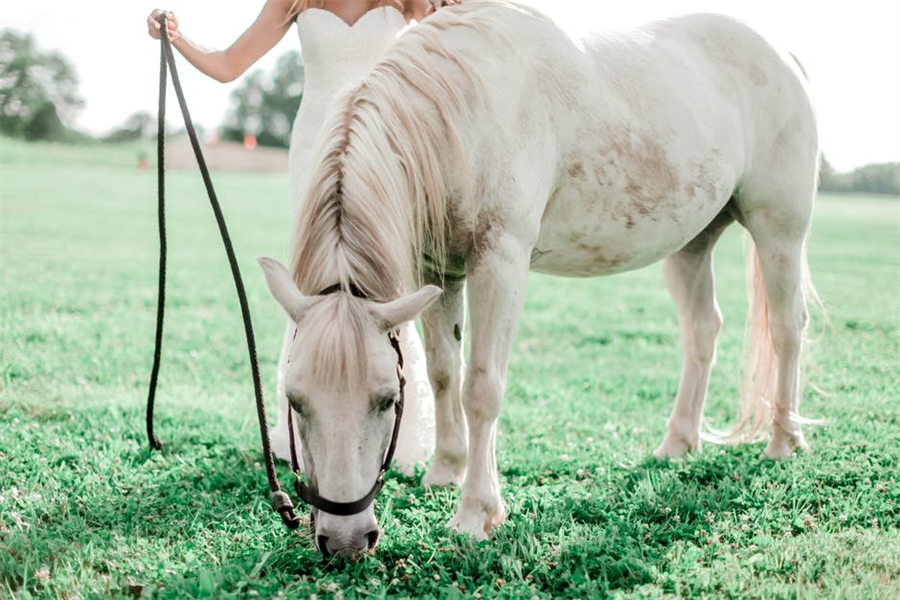 Easy and Simple Methods to Take Proper Care of Your Pet Horse